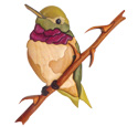 Ruby Throated Hummingbird Intarsia Design Pattern