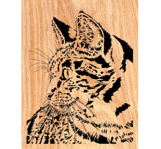 Curious Kitty Scrolled Art Design Pattern